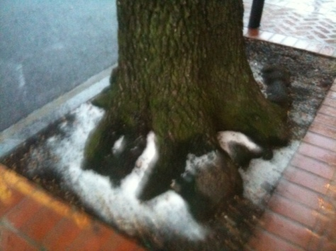 snow at the tree trunk-Orleans Ave